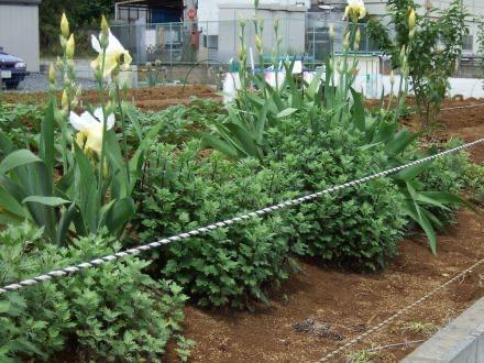 新座市の園芸